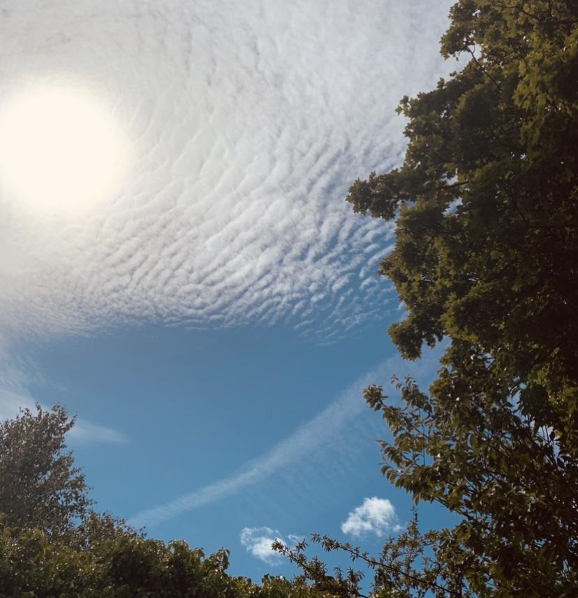 sun-clouds-trees-sunbathing-playlist-record-weekly