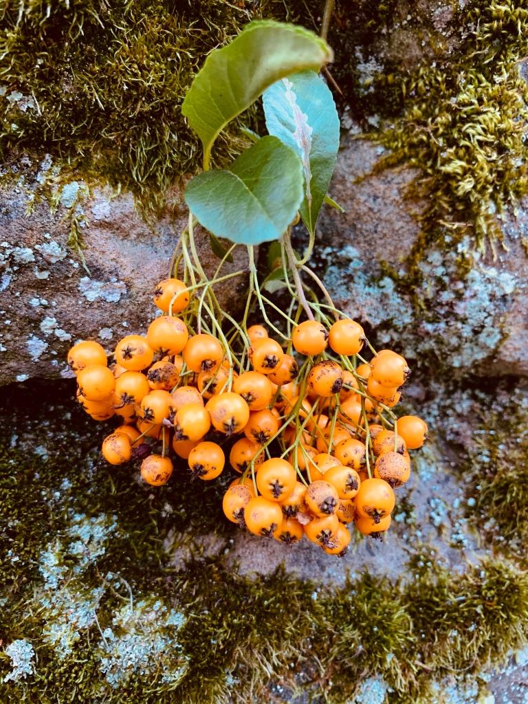 berries-record-weekly